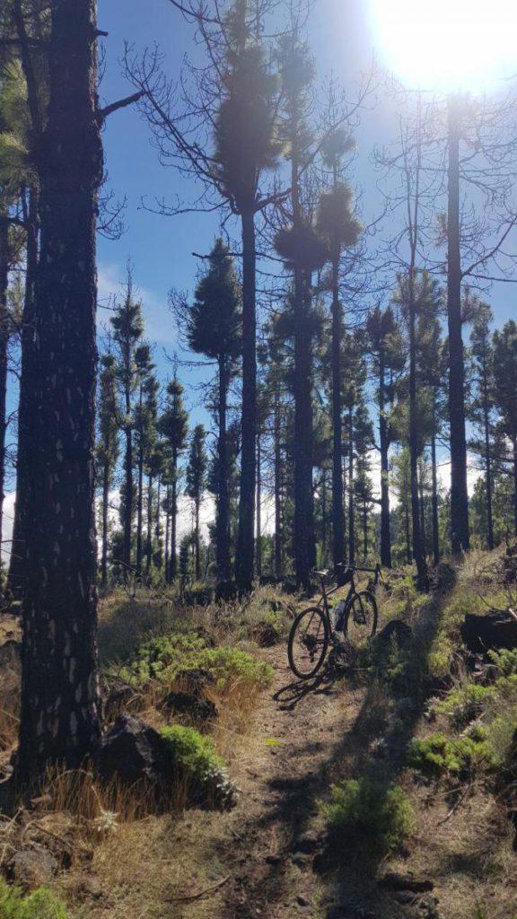 Caminos entre pinares cerca del Pico de Las Nieves