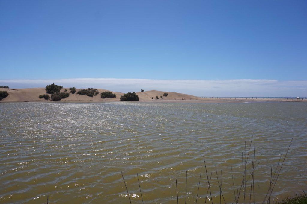 Reserva Natural Especial Charca de Maspalomas