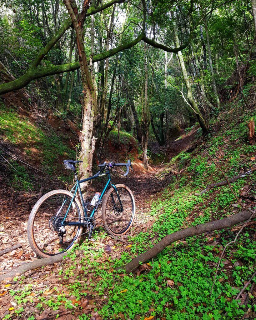 Route in Gravel bike between trees