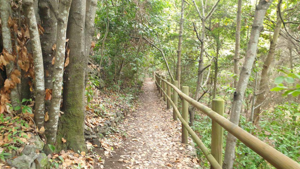 Los Tilos de Moya hike