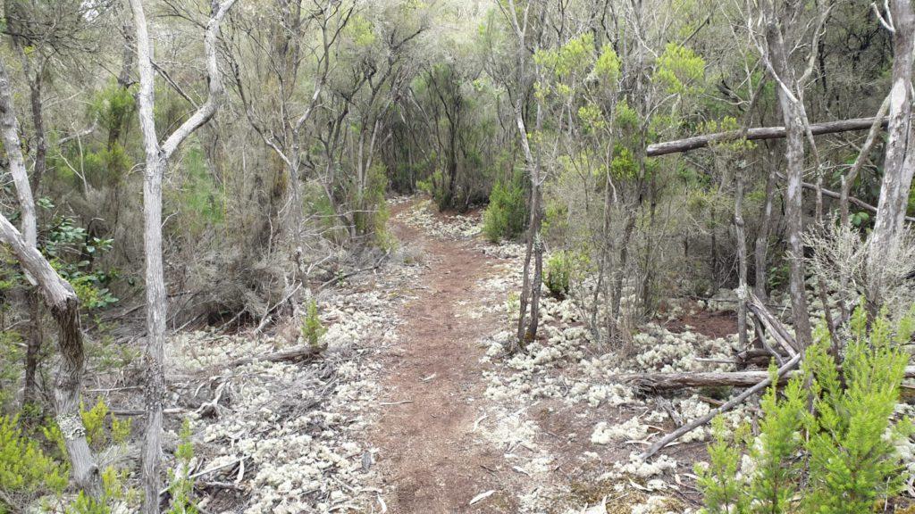 Trail after passing Santa Cristina