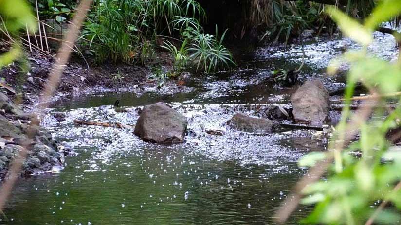 aguas del barranco de azuaje