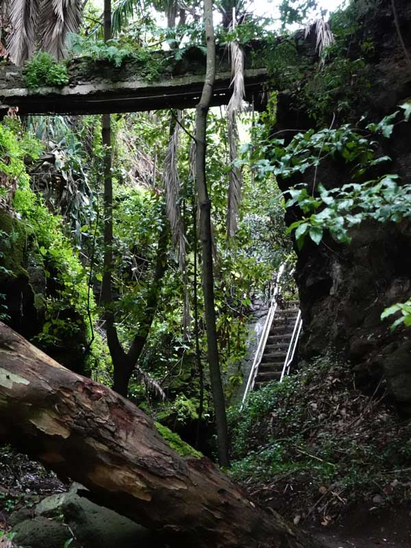 Hiking in Teror. Wooden stairs during El Álamo hike