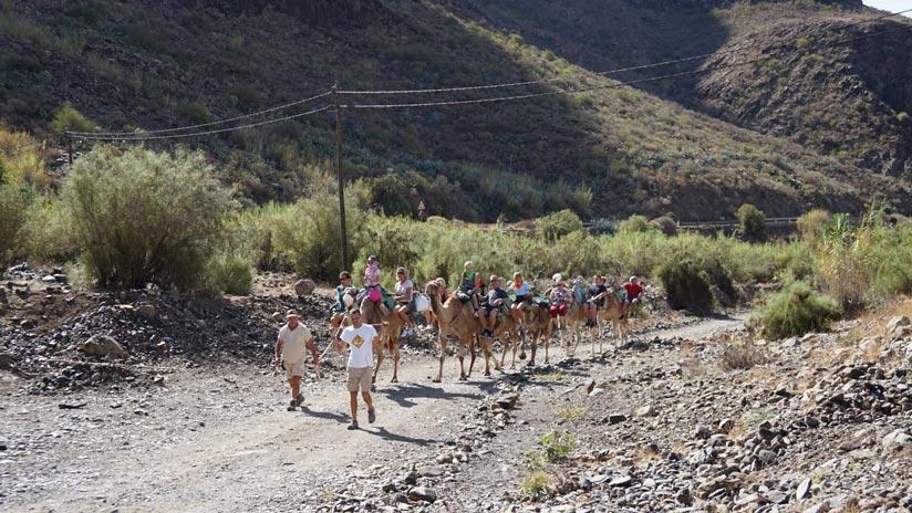 Camel ride in arteara