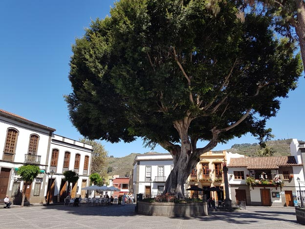 plaza del pino