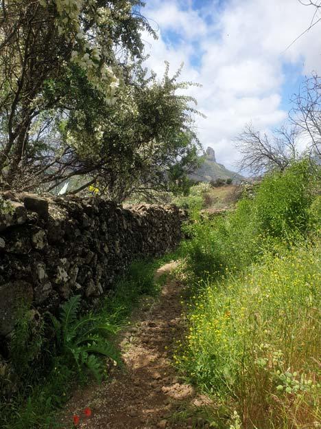 sendero y Roque Bentayga al fondo