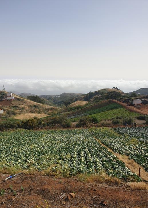 agricultura en galdar